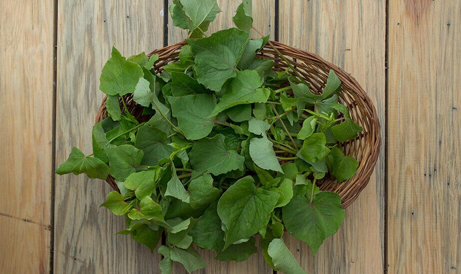 Faparko saag, buckweat shoots