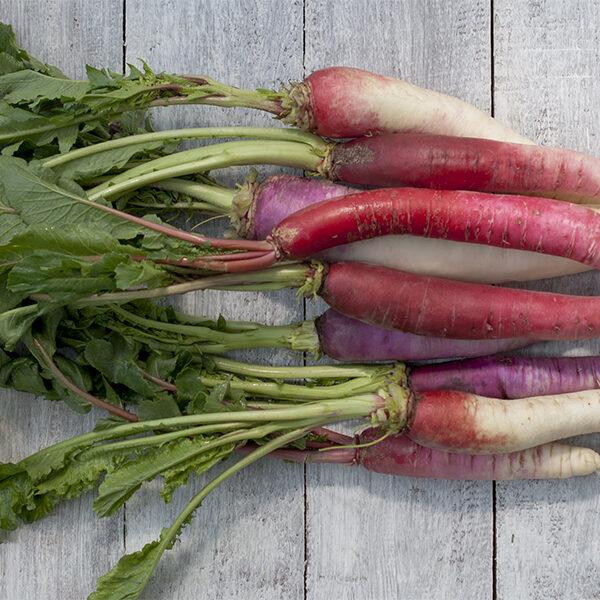 Rato mula, Nepali red radish